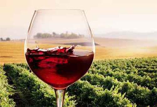 calice di vino rosso davanti ad una vigna